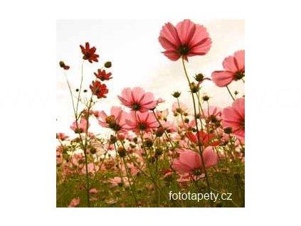 Samolepící velkoplošná nálepka - Luční květiny, 100x100cm