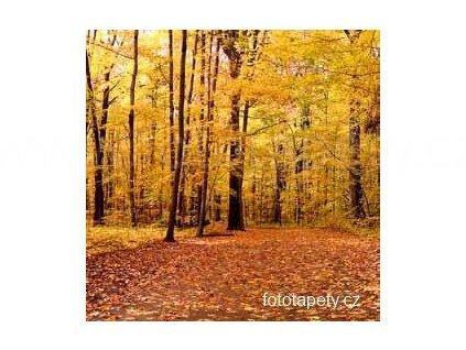 Samolepící malířské plátno - Podzimní les, 100x100cm
