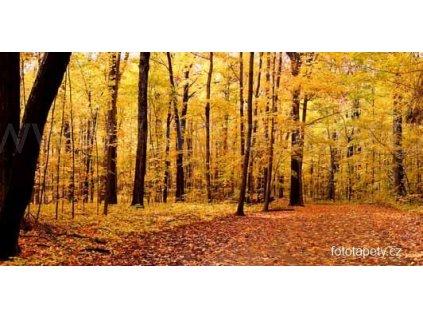 Samolepící velkoplošná nálepka - Podzimní les, 180x100cm
