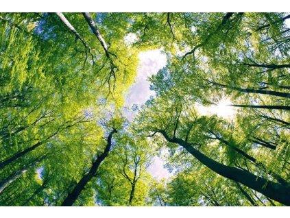 Samolepící fototapeta na podlahu - Klenby stromů, 255x170cm, 001