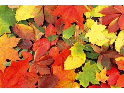 Samolepící fototapeta na podlahu - Podzimní listí, 255x170cm, 005