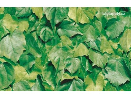 Samolepící tapeta d-c-fix imitace přírodního materiálu, vzor Zelené listy