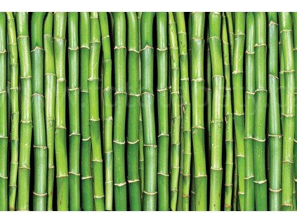 Pětidílná vliesová fototapeta Bambus, rozměr 375x250cm, MS-5-0165