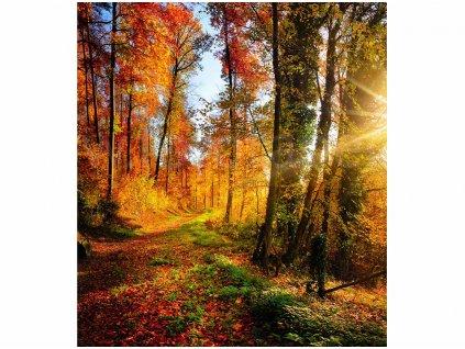 vliesová fototapeta Podzimní les