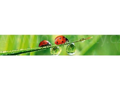 KI 350 015 ladybird