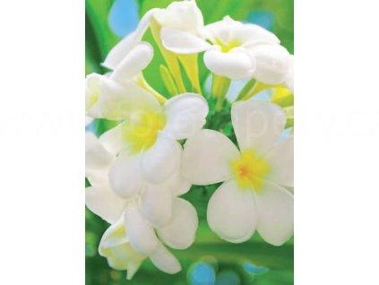 Čtyřdílná fototapeta, Frangipani blossoms, 183x254cm, 4D ID 377, skladem poslední 3 ks!