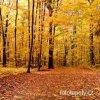 Samolepící velkoplošná nálepka - Podzimní les, 100x100cm