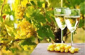 bilé vína