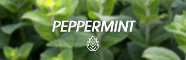 Zapach Peprmint
