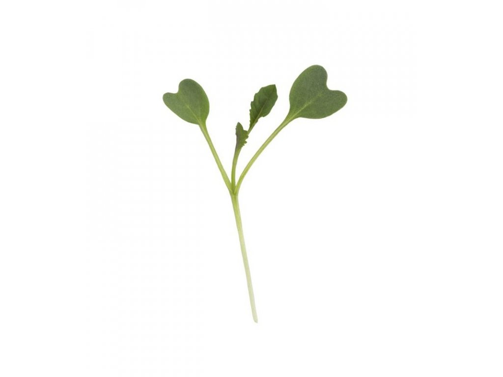 tuscan kale microgreens seeds