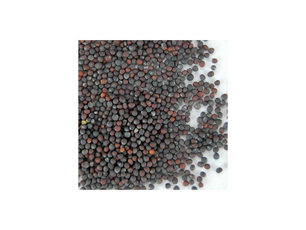 cabagge seeds 500x500