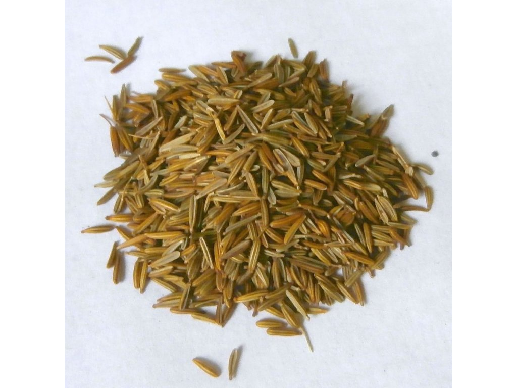 root chervil seeds