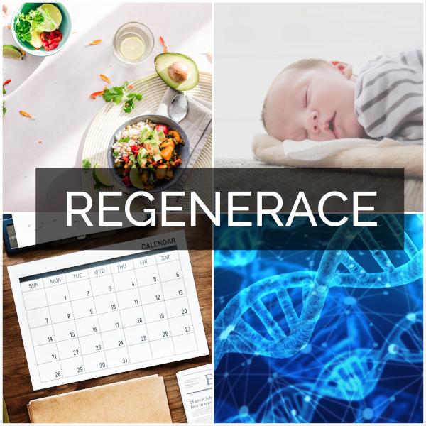 Faktory ovlivňujicí regeneraci