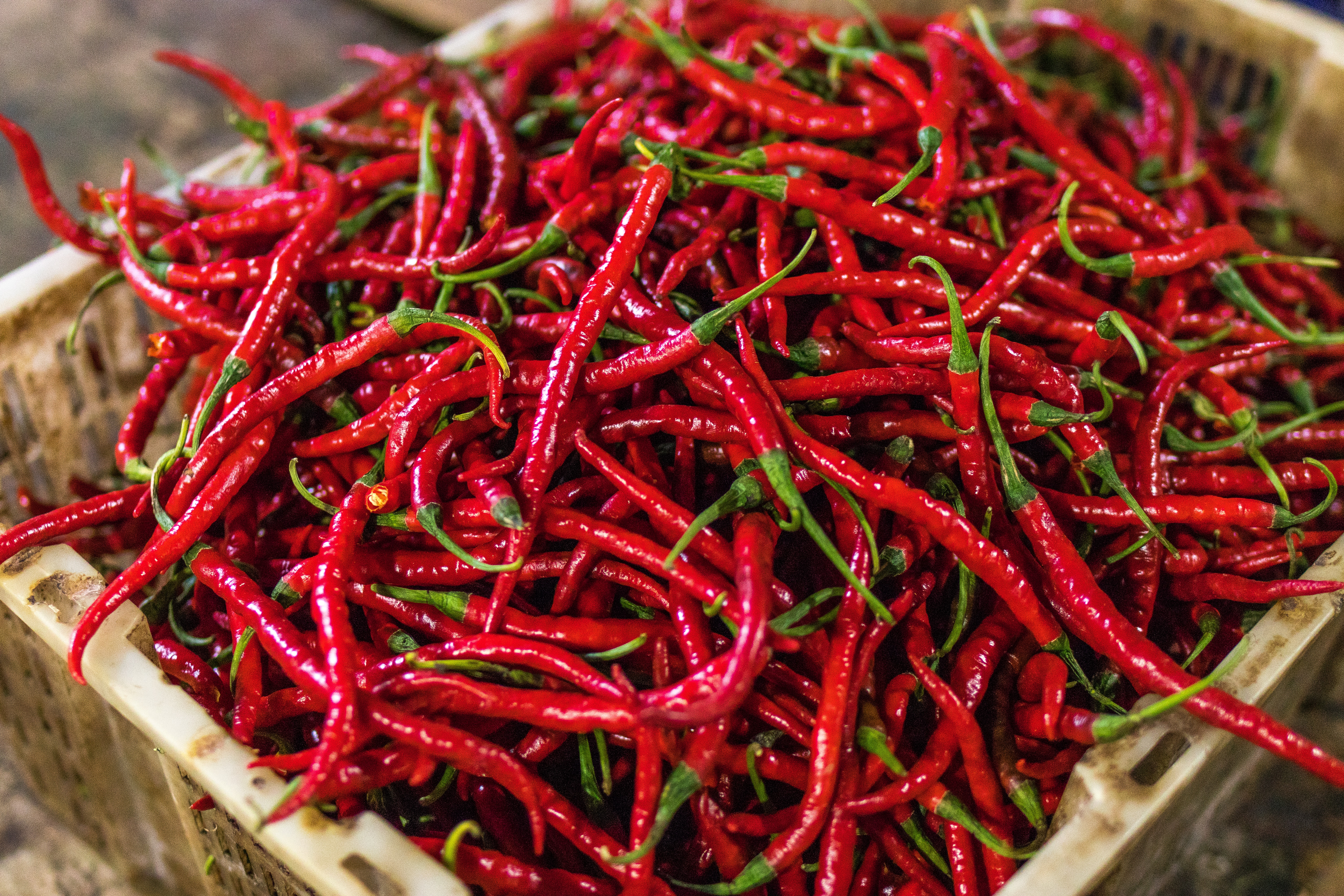 agriculture-chilli-color-1086719