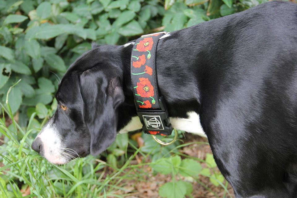 poppy zakaznik pointer