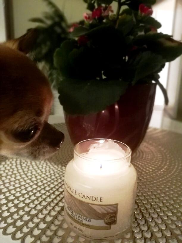 Ako predĺžiť životnosť a vôňu sviečky?