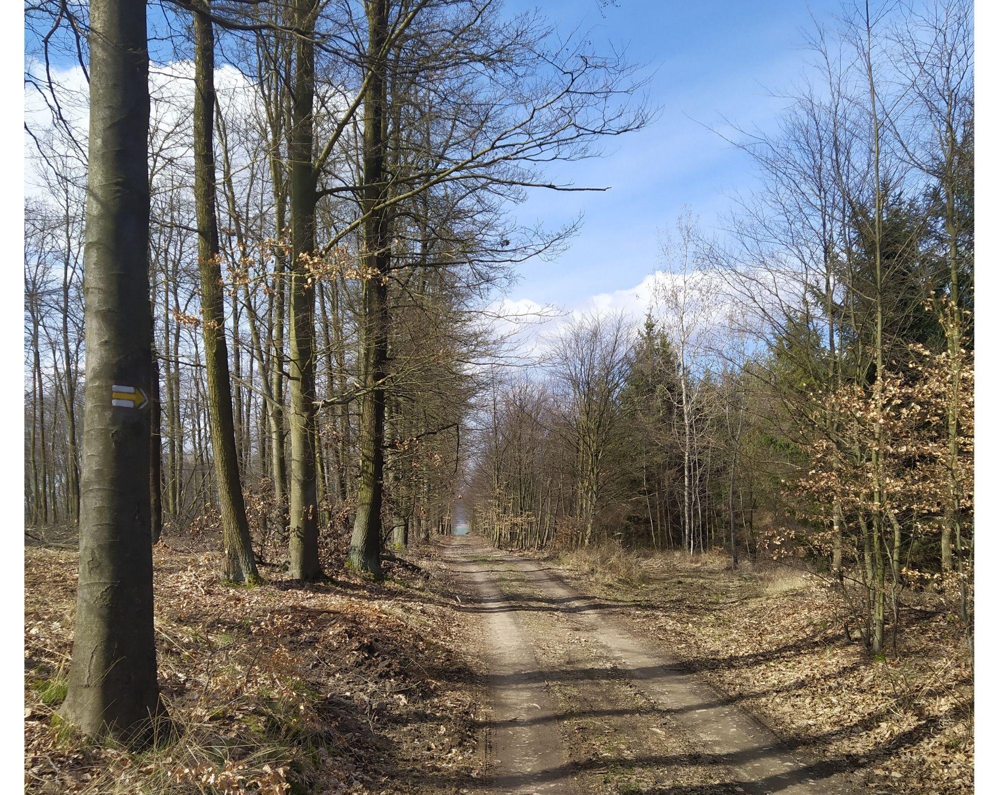 Podkomorské lesy 6. etapa
