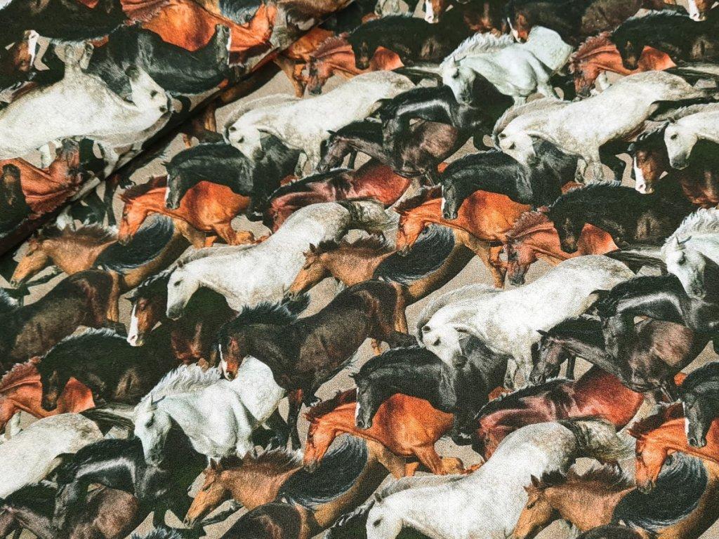 Bavlněné plátno - Koně