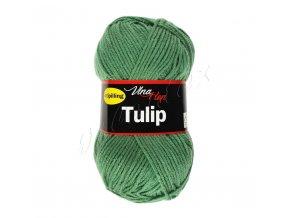 tulip4135
