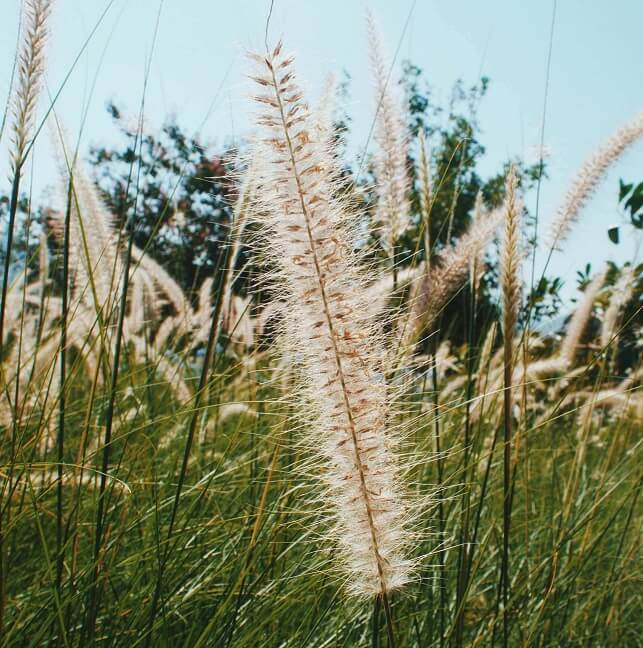 7 věcí, které byste měli vědět o Bofixu