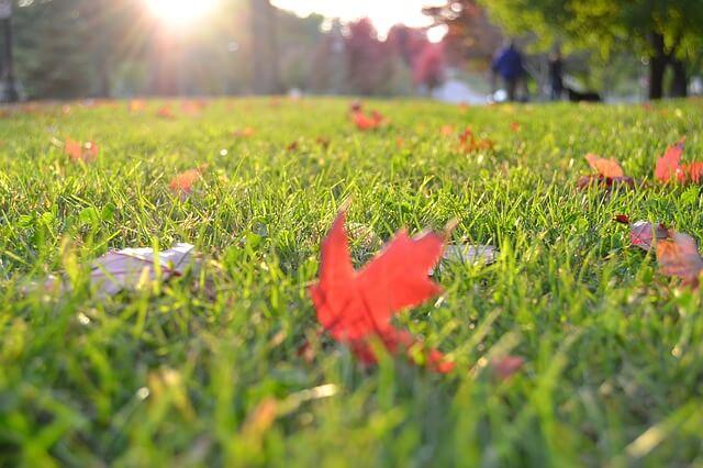 Proč je podzimní péče o trávník tak důležitá?