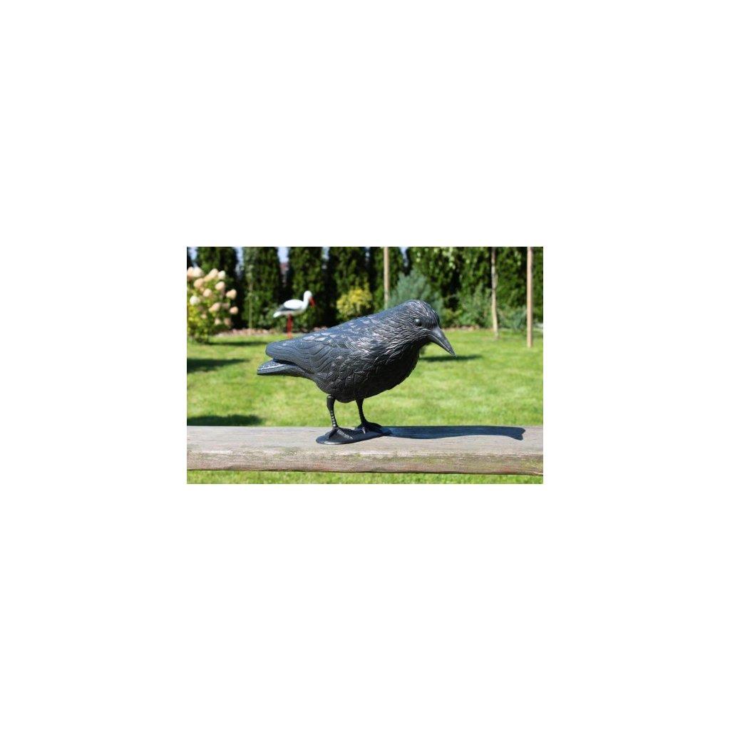 Odpuzovač ptáků – vrána