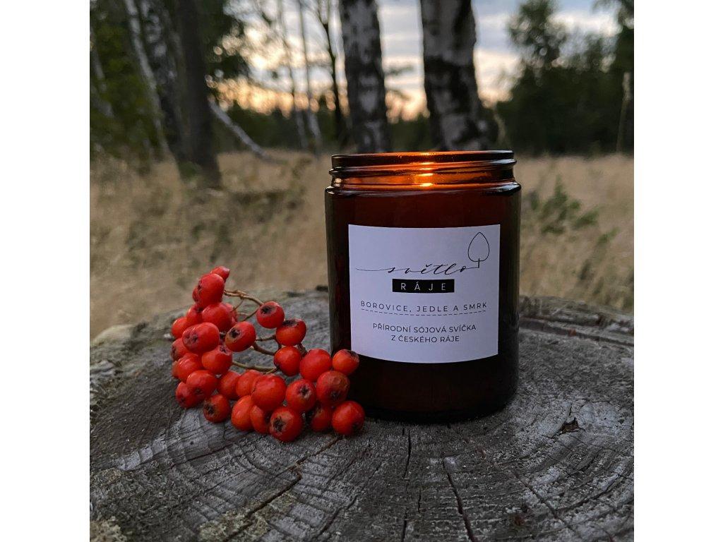borovice jedle smrk