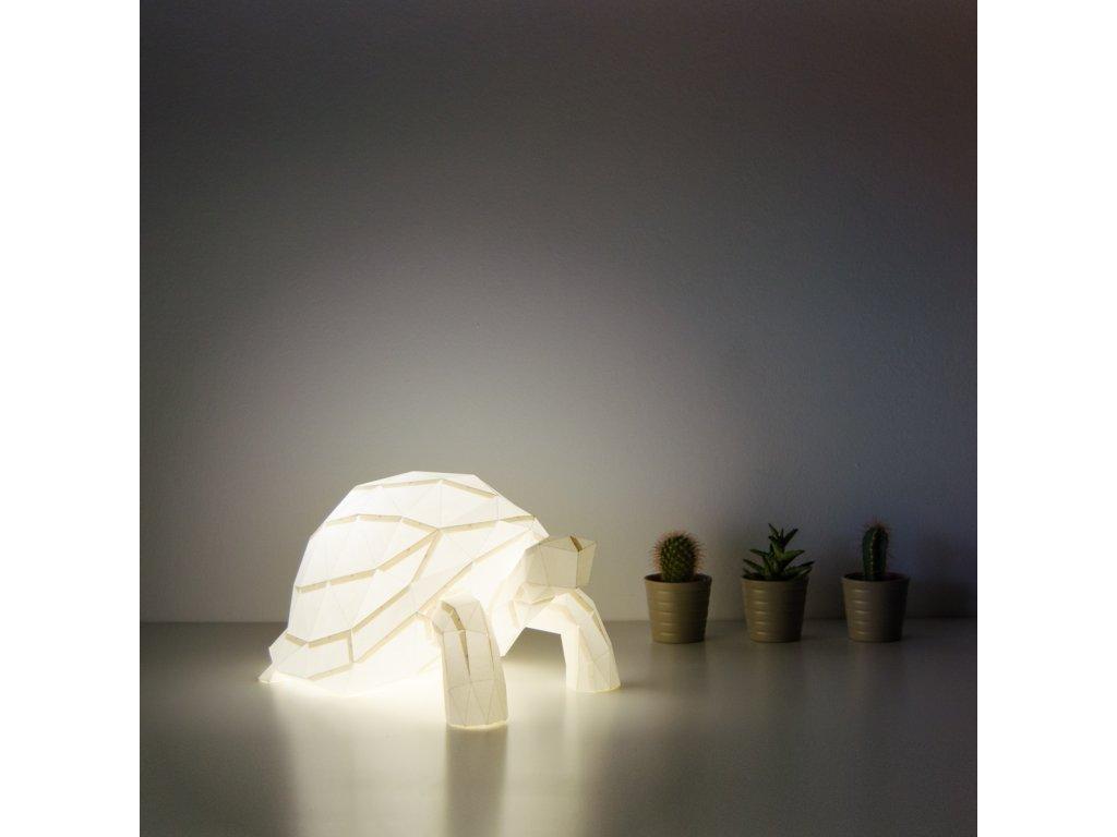 tortoise 07 DSC 0332 c