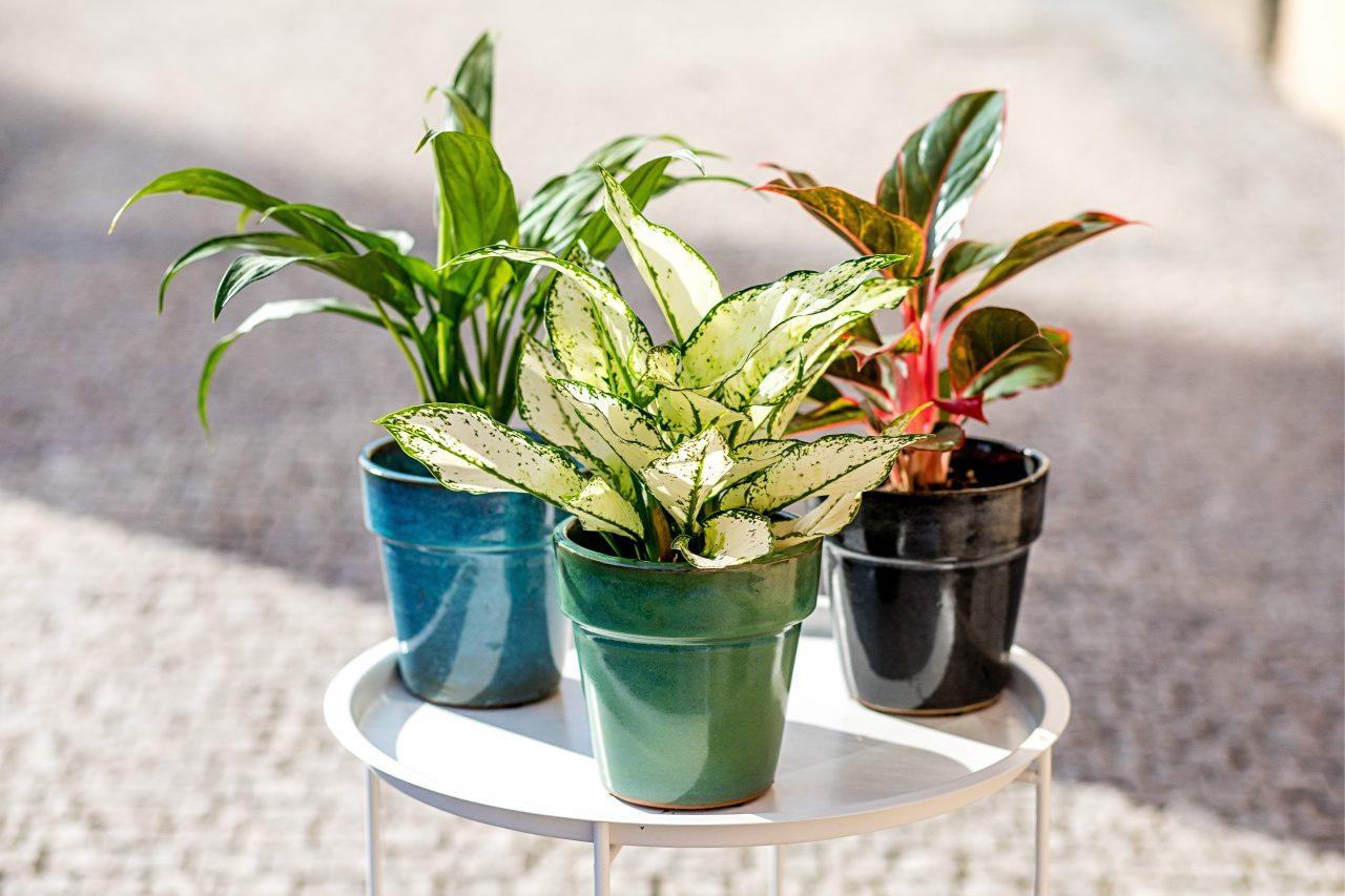 Jak pečovat o rostliny v létě