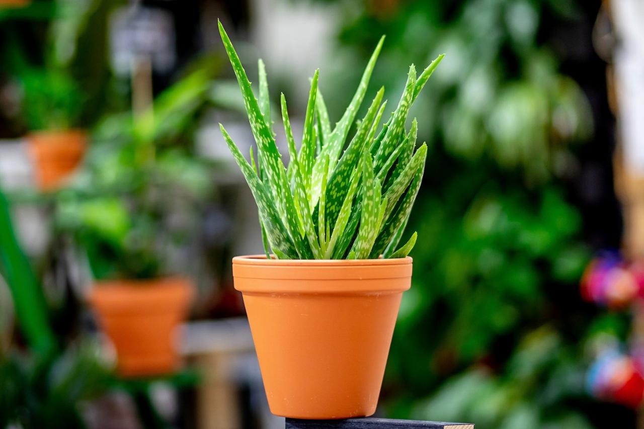 Pokojové rostliny k užitku