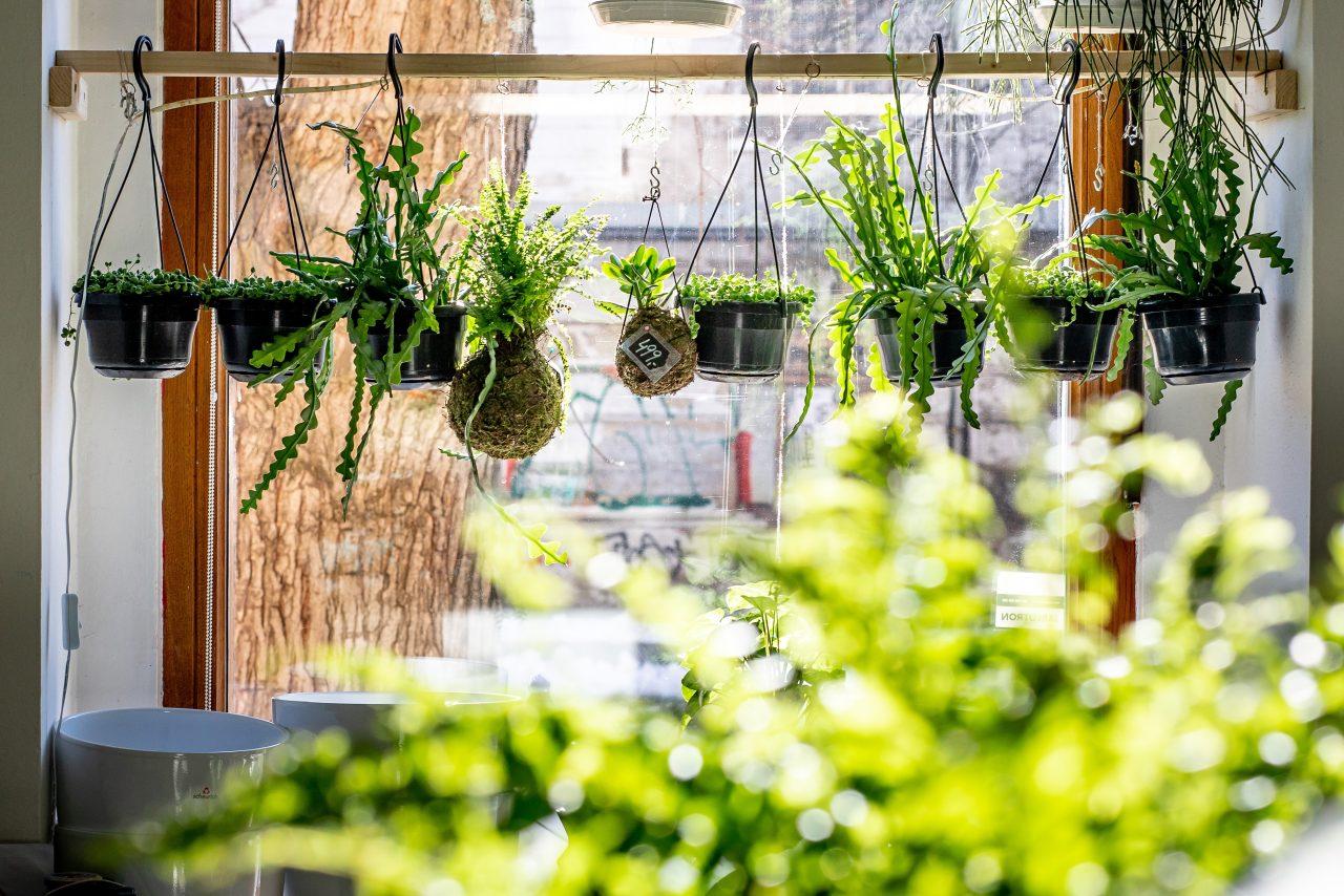 Pokojové rostliny užitečnými pomocníky