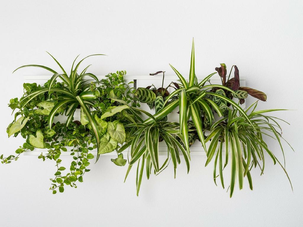 Obrazy z živých rostlin