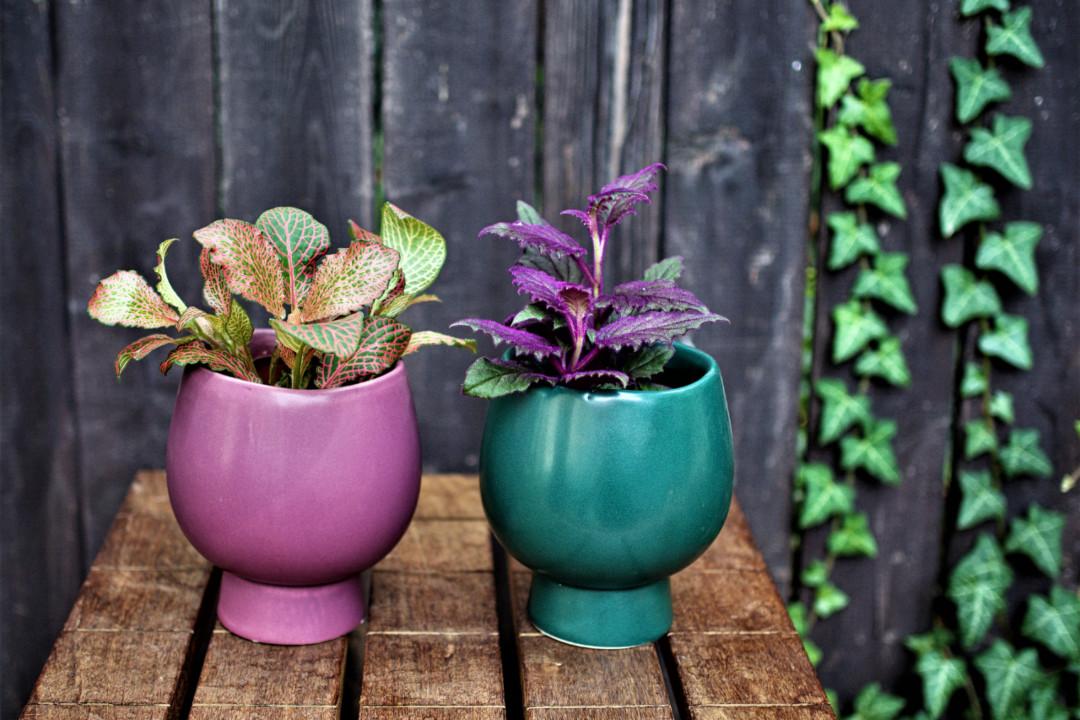 Jak pečovat o rostliny na podzim