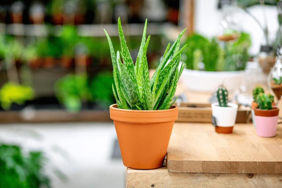 5 nenáročných pokojových rostlin