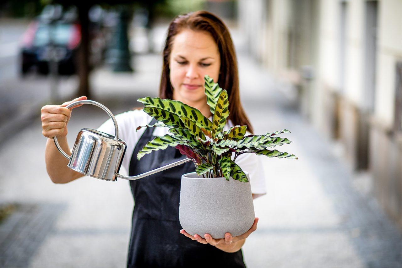 Co s novou pokojovou rostlinou