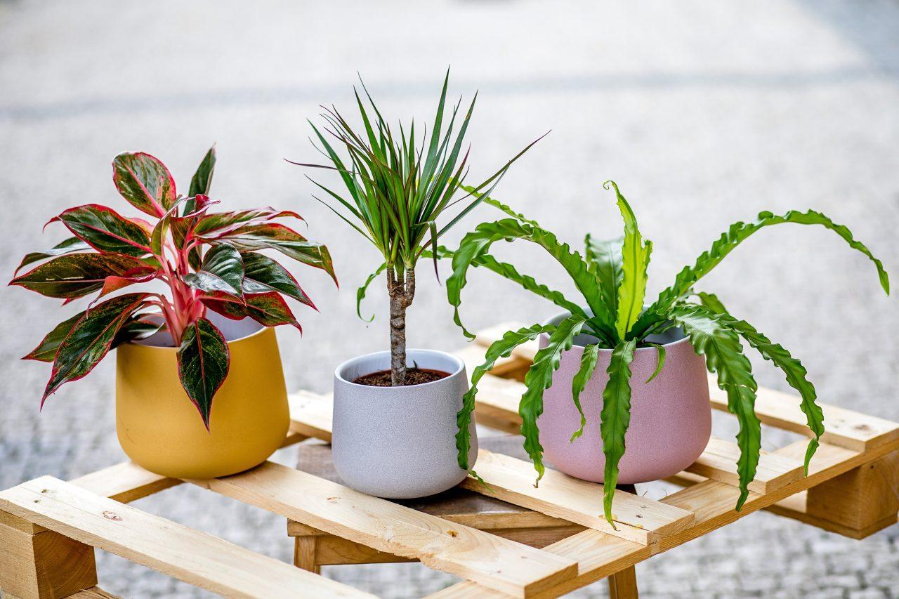 Jak pečovat o rostliny na jaře