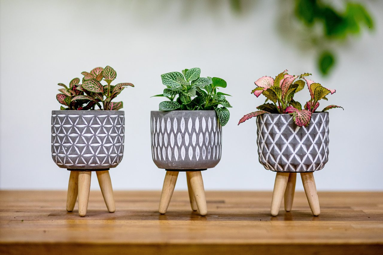 Rostliny podle Feng-shui