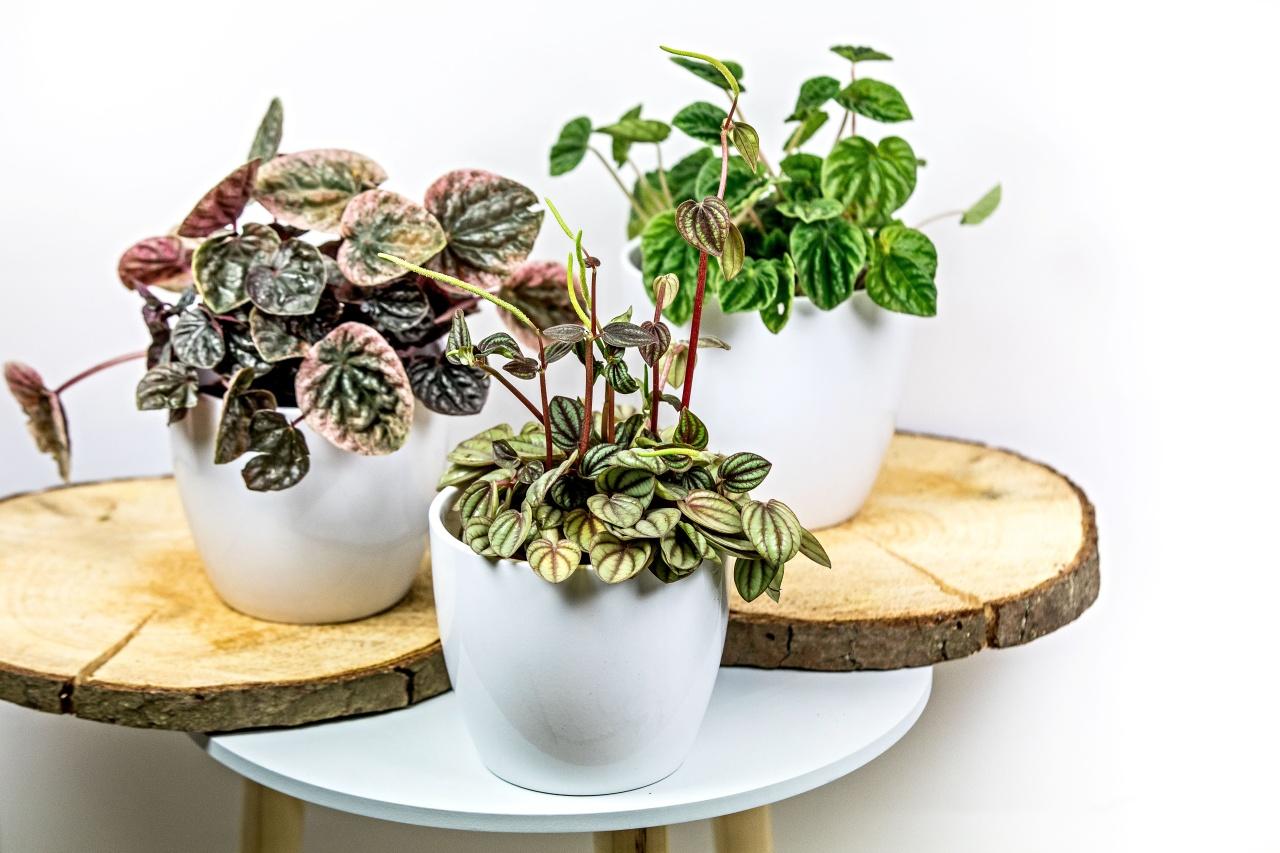 Pokojové rostliny do paneláku