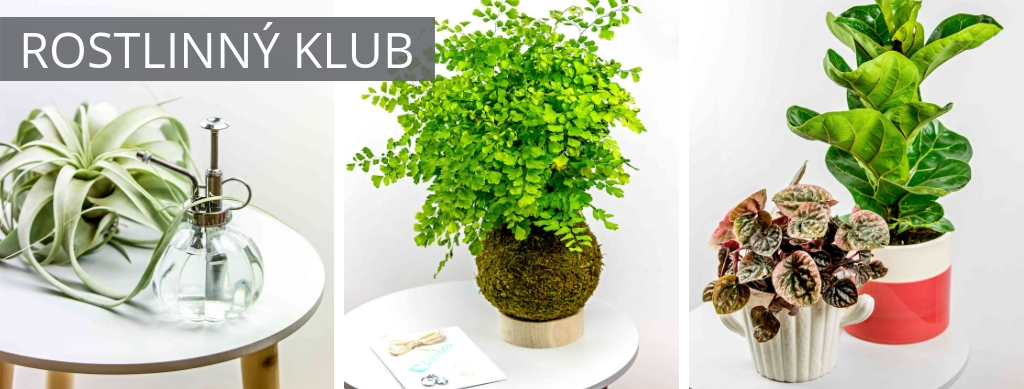 První rostlinný klub