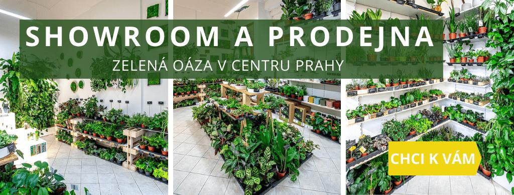 Zahrada na stěnu - showroom a prodejna