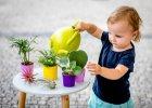 Baby friendly rostliny