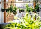 Rostliny co čistí vzduch