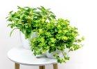 Rostliny na hodně světla