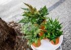 Rostliny do málo světla