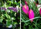 orchideje a bromélie