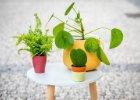 Rostliny pet friendly