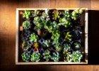 Rostliny vhodné pro sběratele