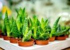 Rostliny vhodné pro začátečníky