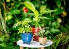 Rostliny podle druhu