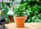 Rostliny co mají užitek